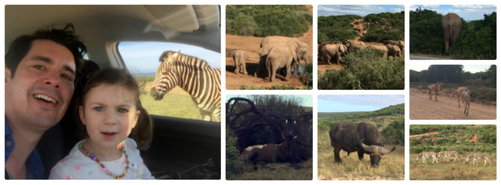 Addo Collage
