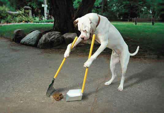 perro-limpiando-excrementos