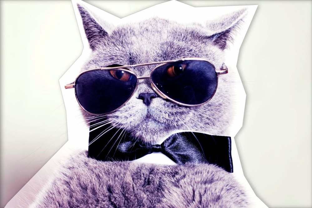 Cool-Cat---ElvenElegance