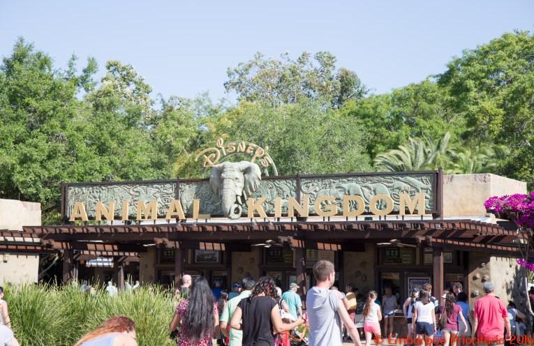 Disney Animal Kingdom em Orlando