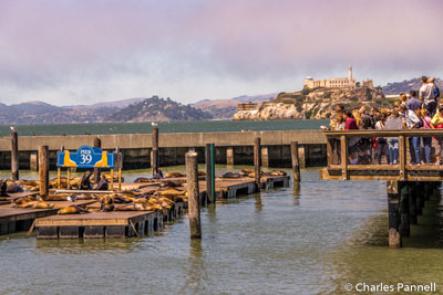 Sea lions and Alcatraz in the background at Pier 39