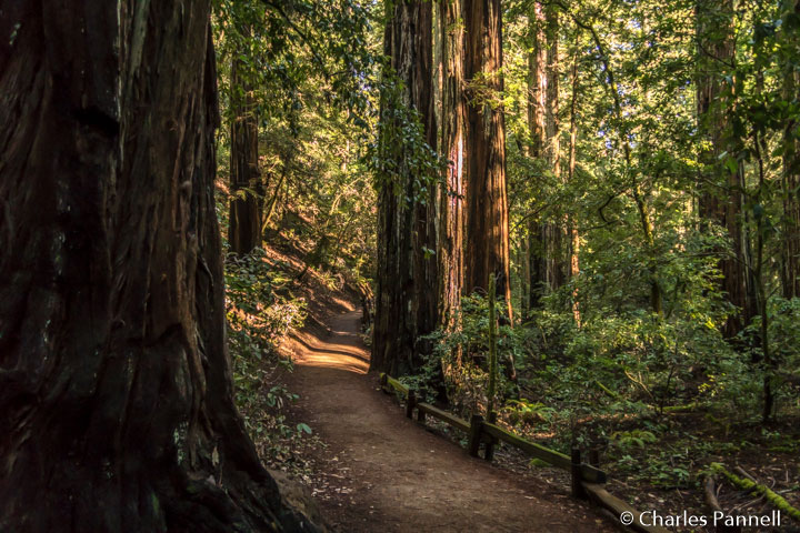 The Armstrong Nature Trail in Armstrong Redwoods State Park