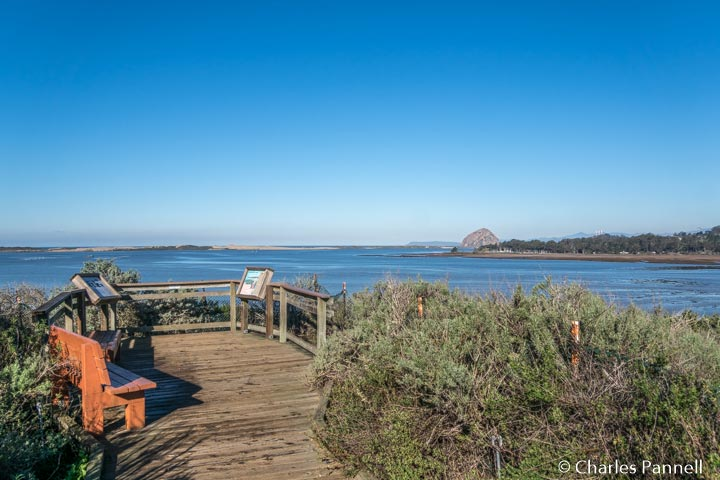 View of Morro Bay Estuary from Bush Lupine Point on the El Moro Elfin Forest Natural Area