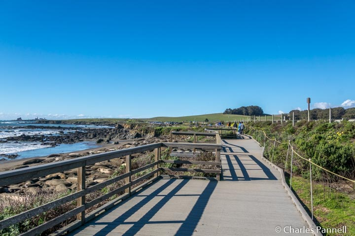 Elephant Seal Boardwalk