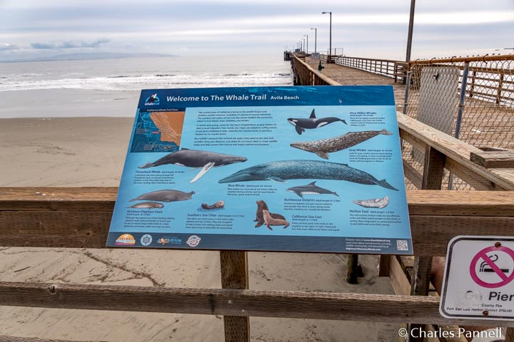 It's Gray Whale Season Along the Central California Coast!