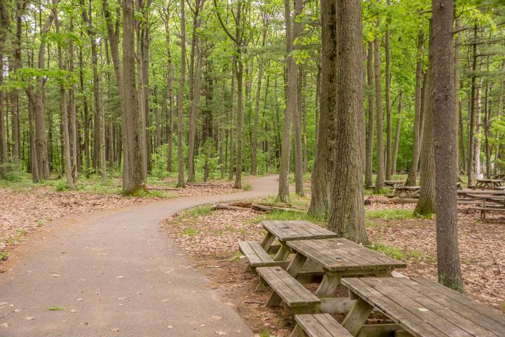 Trail near the lake