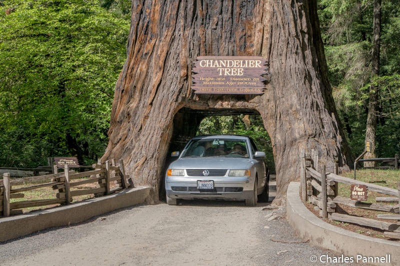 Add These Drive-Through Trees to Your Next California Road Trip