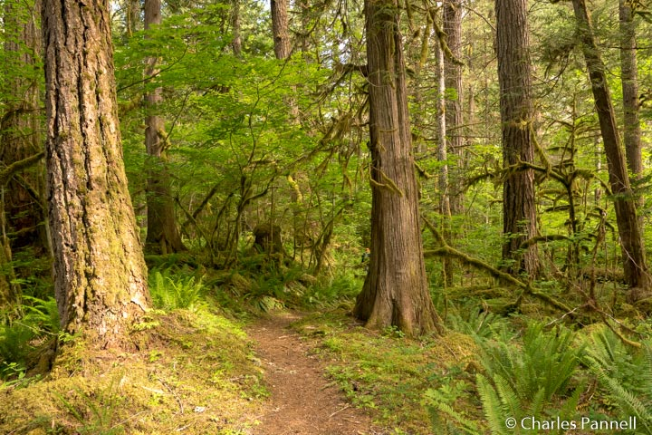 Linking Trail in Northern Cascades National Park