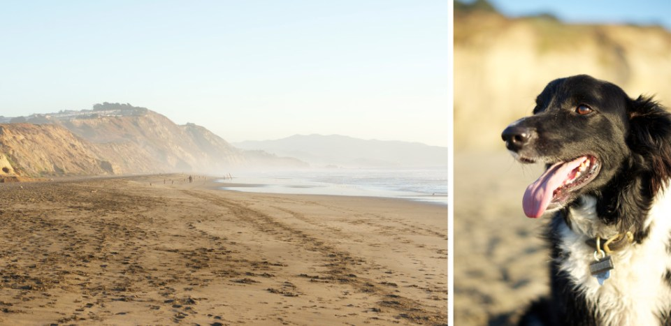 Fort Funston - A Beautiful Dog Friendly Beach in San Francisco