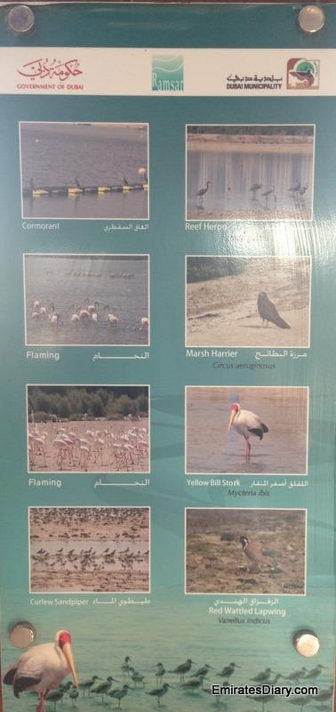ras-al-khor-wildlife-santuary-pictures-01