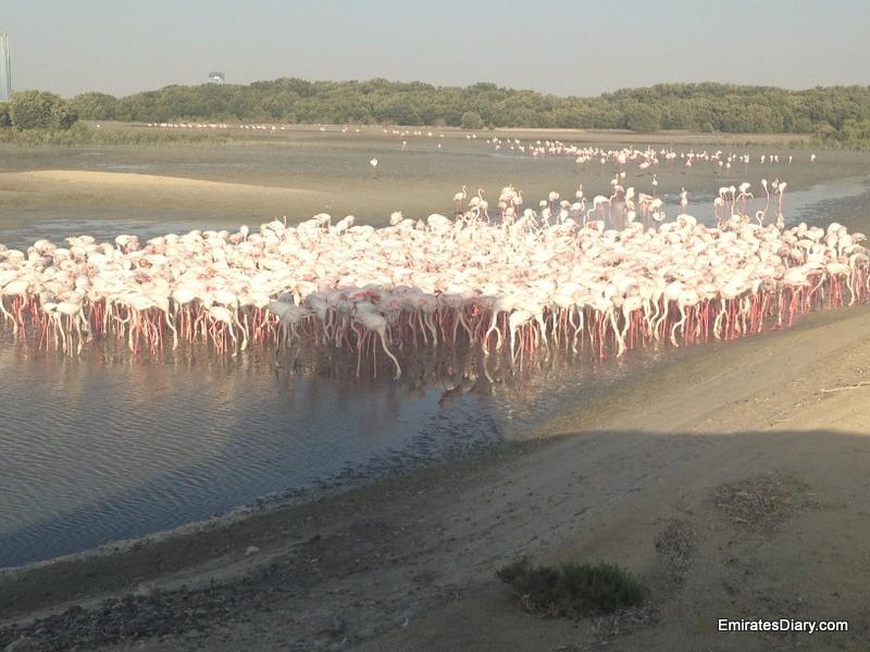ras-al-khor-wildlife-santuary-pictures-08