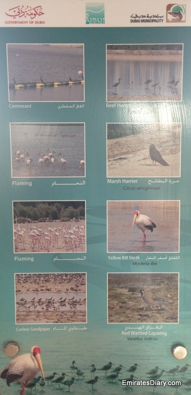 ras-al-khor-wildlife-santuary-pictures-19