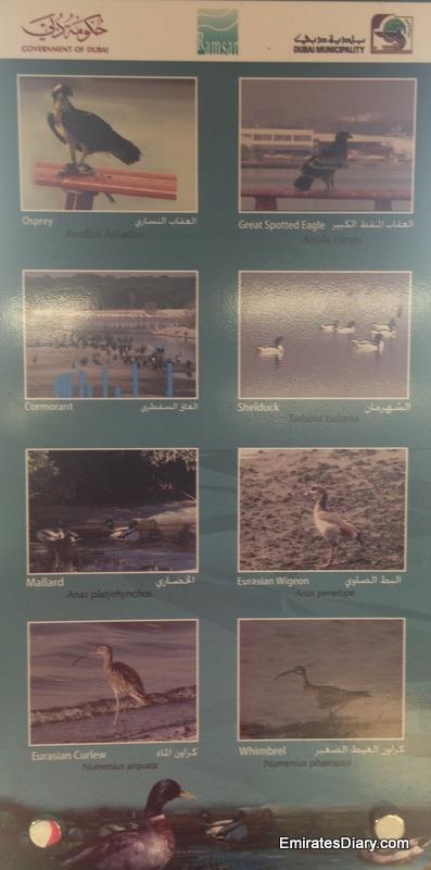 ras-al-khor-wildlife-santuary-pictures-24