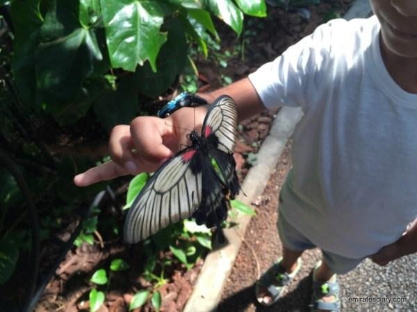 60-butterfly-garden-dubai-pictures-2015-emiratesdiary-060
