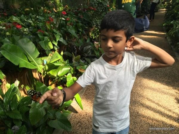82-butterfly-garden-dubai-pictures-2015-emiratesdiary-082