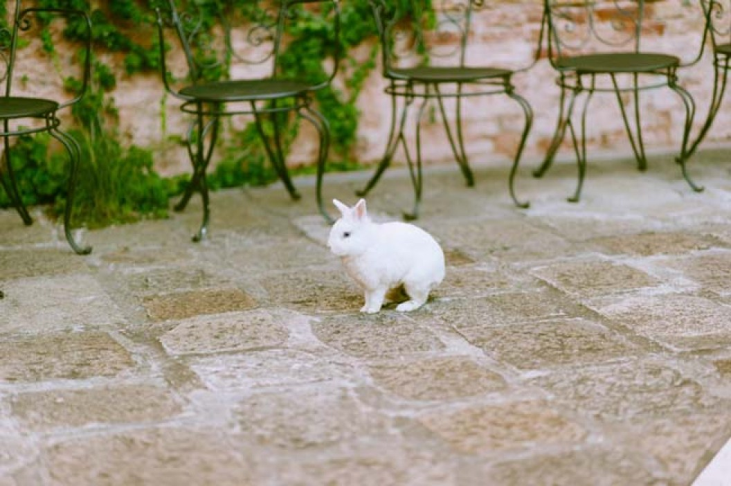 white rabbit | photo: adrian wood | real wedding in italy