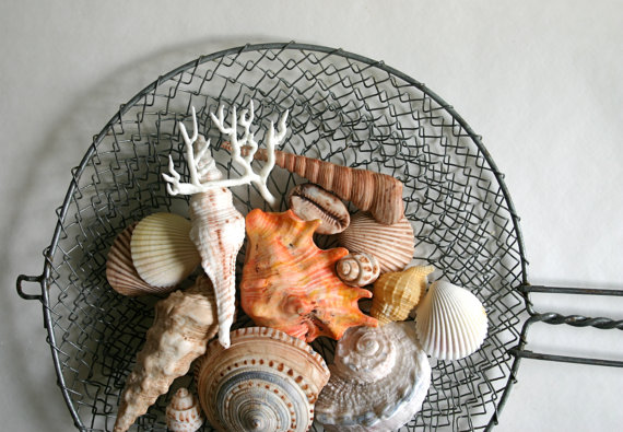chocolate seashells (via Coastal Wedding Invitations)