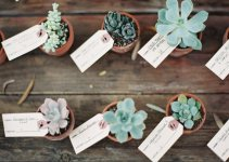 succulent place card favors