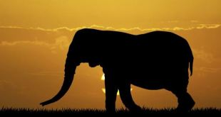 elefante-700
