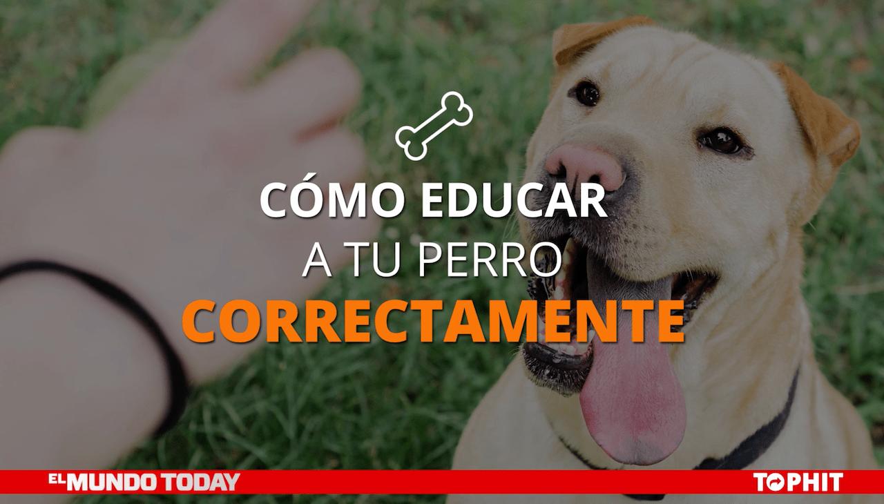 Cómo educar a tu perro correctamente