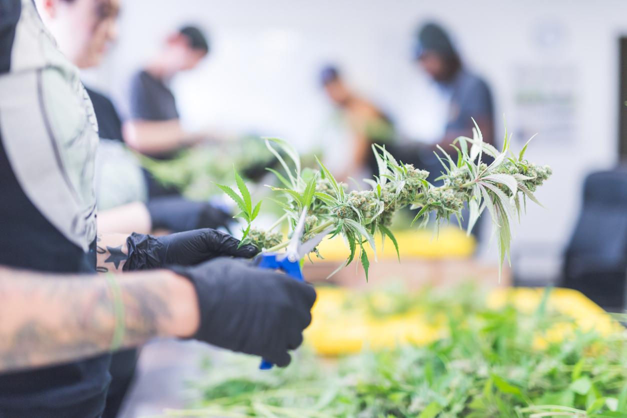 ¿Qué opinan los españoles de la legalización de la marihuana?