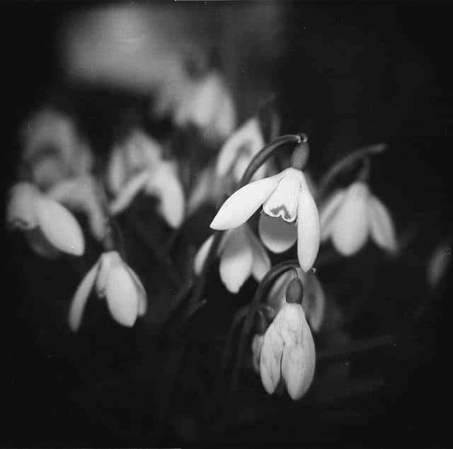 Snowdrops - Toy Camera Daypack