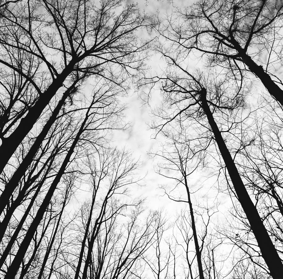 Preston Young - Winter Tree Silhouette