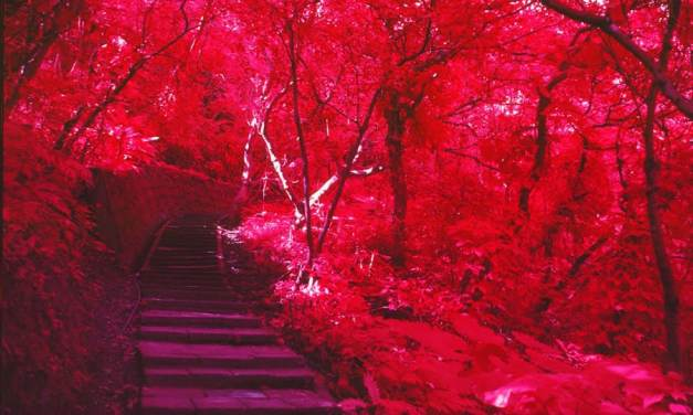 Film review: Kodak AEROCHROME III Infrared Film (1443)