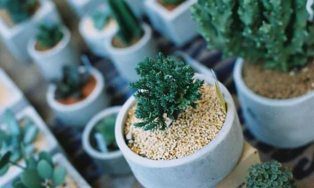Succulents – Kodak High Definition 200 (35mm)