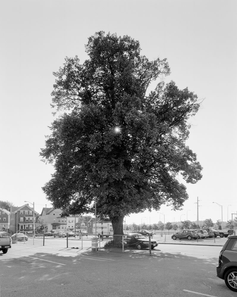Tree at the Holy Rosary Church, Fox Point. 2014. 4x5 FP-4, Pyrocat HD.