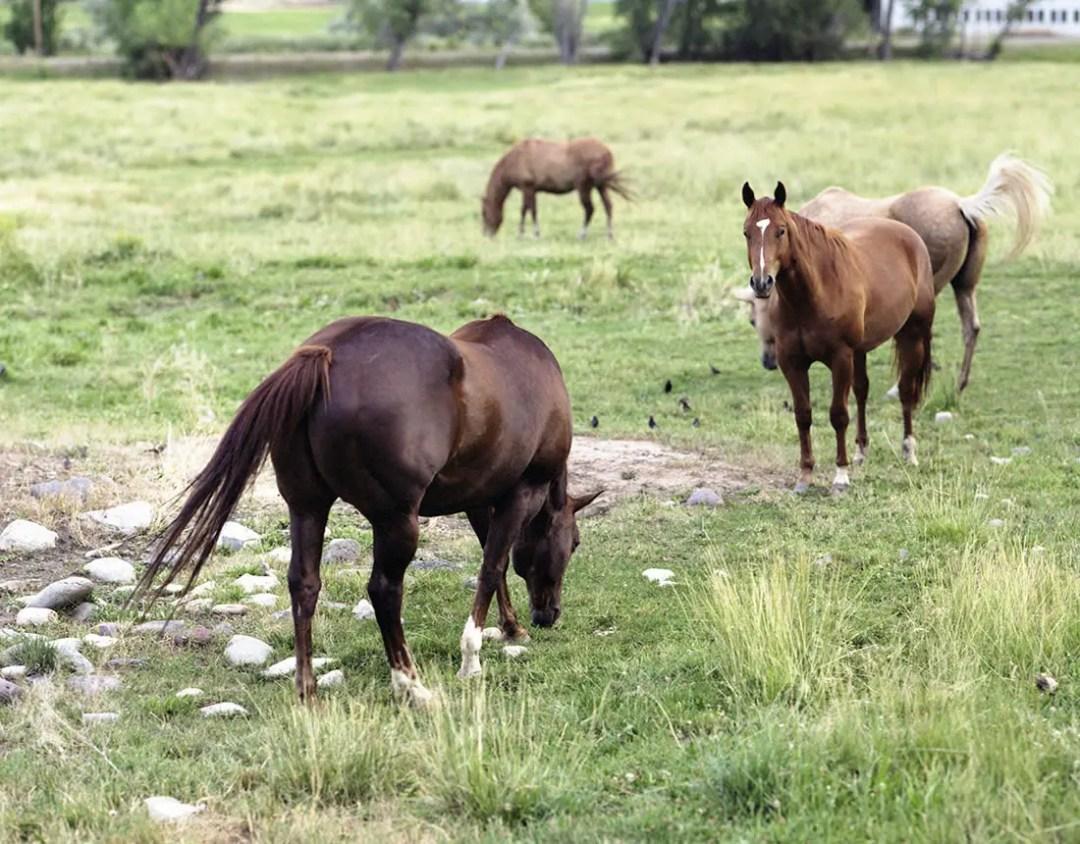Pentax 6x7 - Paonia horses