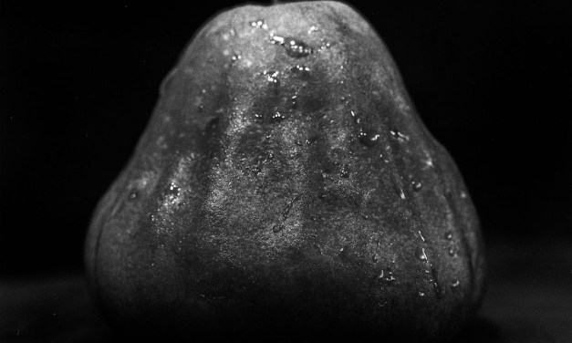 Wax apple light study #01 – Ilford Pan F Plus
