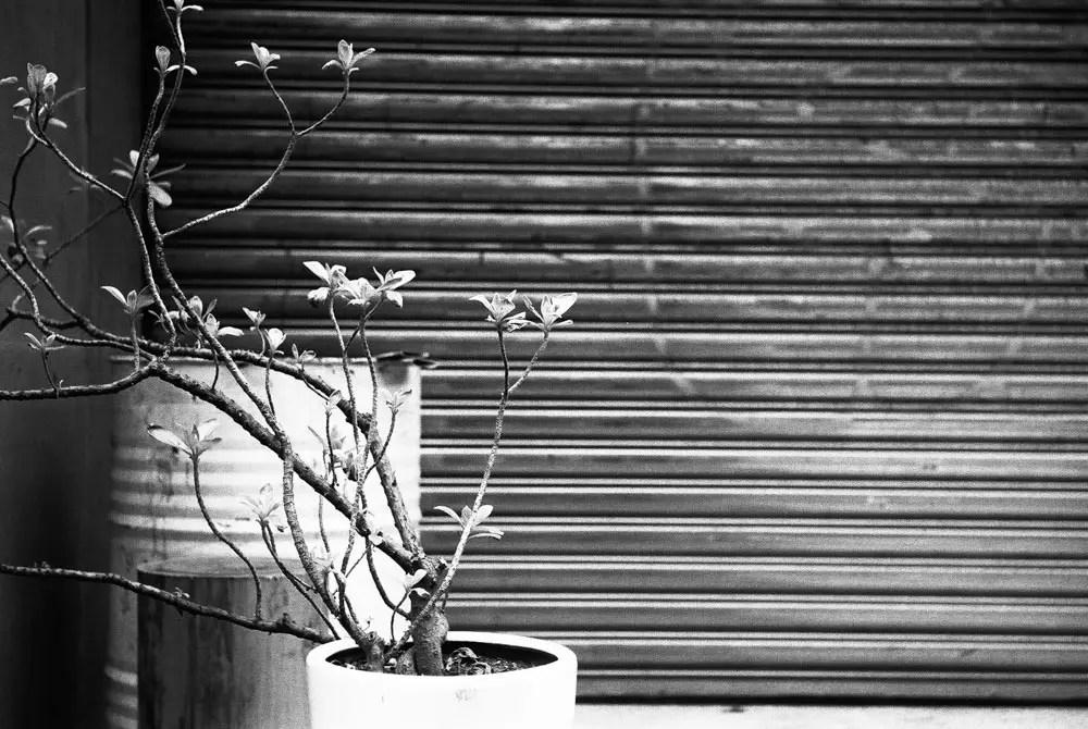 EMULSIVE 52 Rolls - Week 08 - Kodak Tri-X 400 (35mm) - EI1600