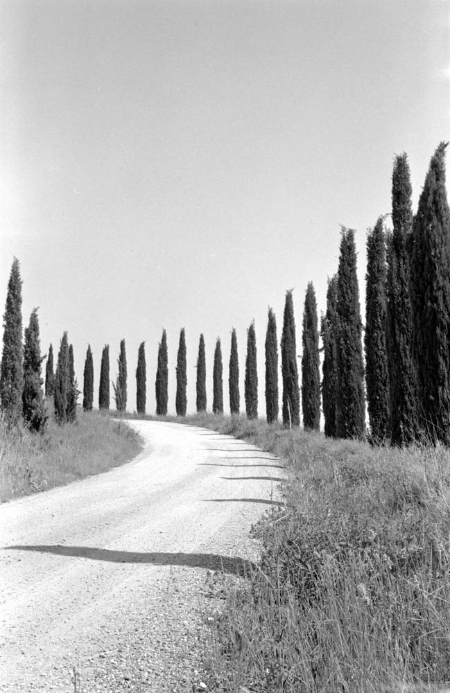 Cypresses (Ikonta 520/2, Ilford HP5+)