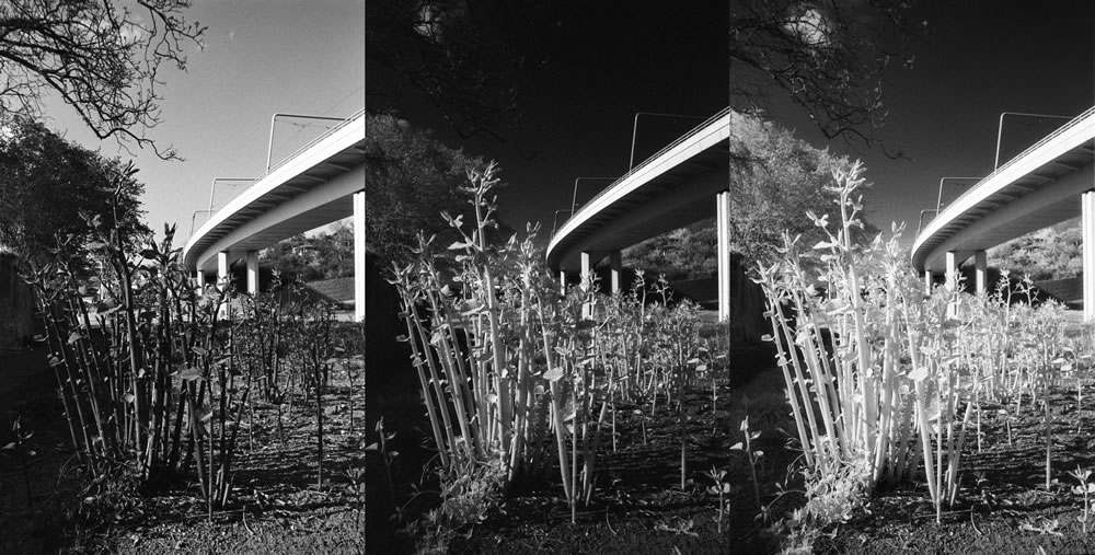 Film review: Fomapan 400 Action / Arista EDU Ultra 400