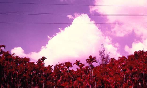 Palm Grove – Kodak AEROCHROME III 1443 (120)
