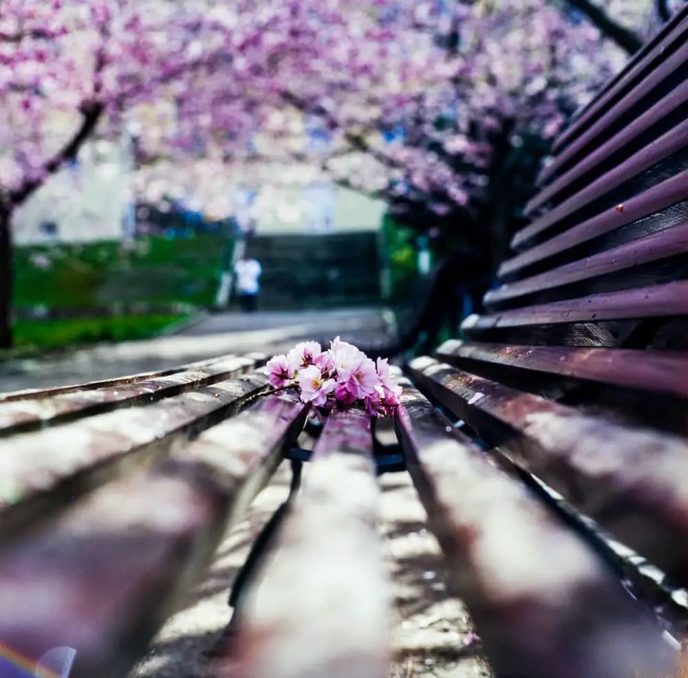 Kodak EKTACHROME Lumiere 100 - Credit: Sina Farhat