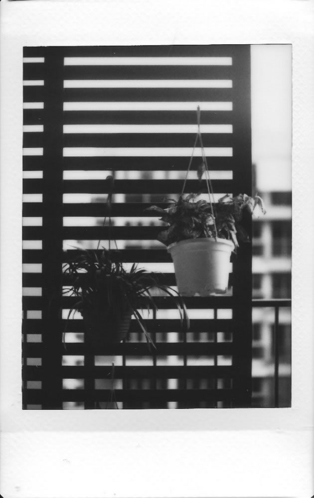 One of our first test shots with the instax mini monochrome film! We must commend on the focusing ability of the lens.