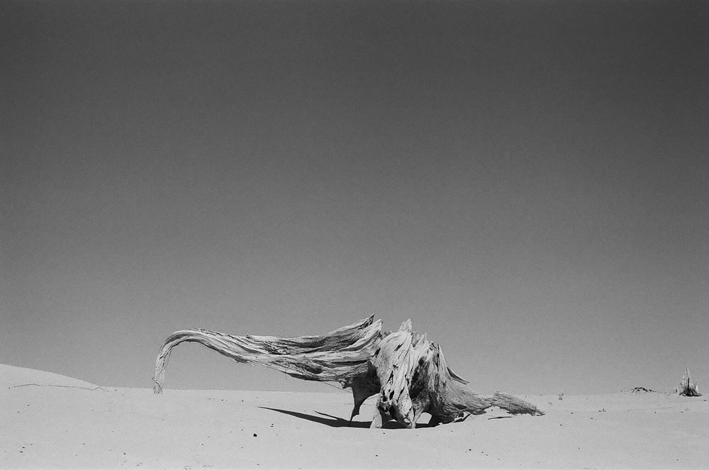 Sand creature, Ilford HP5+, Pentax K1000, sand dunes in West Michigan