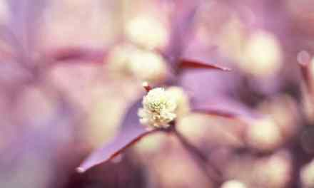 Spring buds #02 – Fuji Provia 400X – RXP (120)