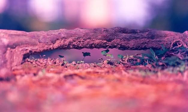 Ant bridge – Kodak EKTACHROME 100VS (120)