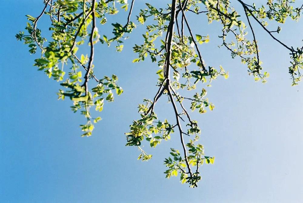 Fujicolor 200 - Spring time