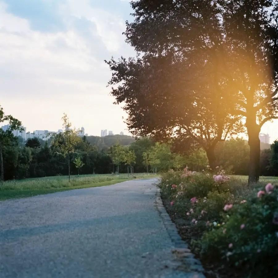 Zenza Bronica S2A - Park, outskirts of Frankfurt