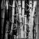 Bunched up – Rollei INFRARED 400 (4×5)