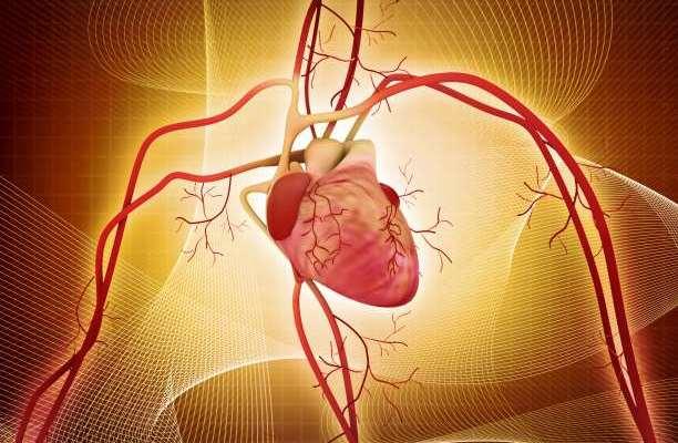 καρδιά καρδιαγγειακό αρτηρίες