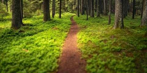 μονοπάτι δάσος