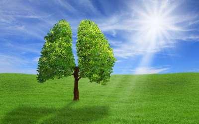 πνεύμονες καθαρός αέρας φύση περιβάλλον