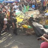 Carabao Shot Dead In Ozamiz Fiesta After Going Amok And Hurt People