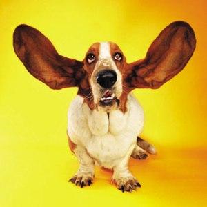 dog-listeningstening