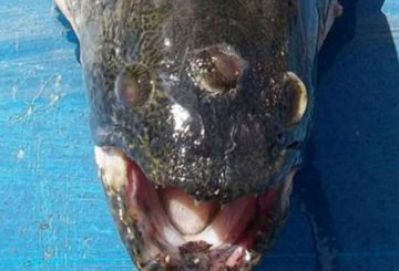 three-eyed-fish-2